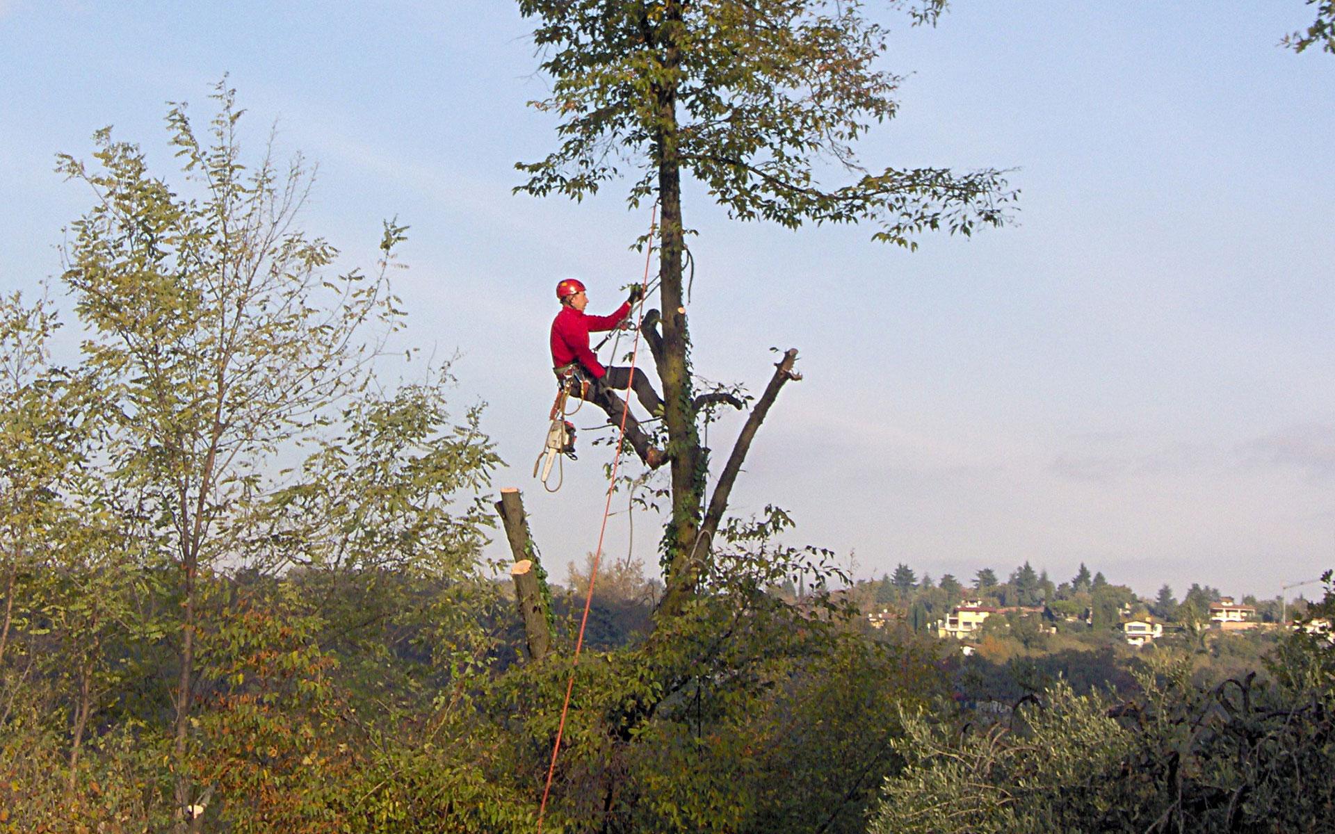 https://www.leforbici.eu/wp-content/uploads/2019/12/forbici-tree-climbing-potatura-alberi-lago-garda.jpg
