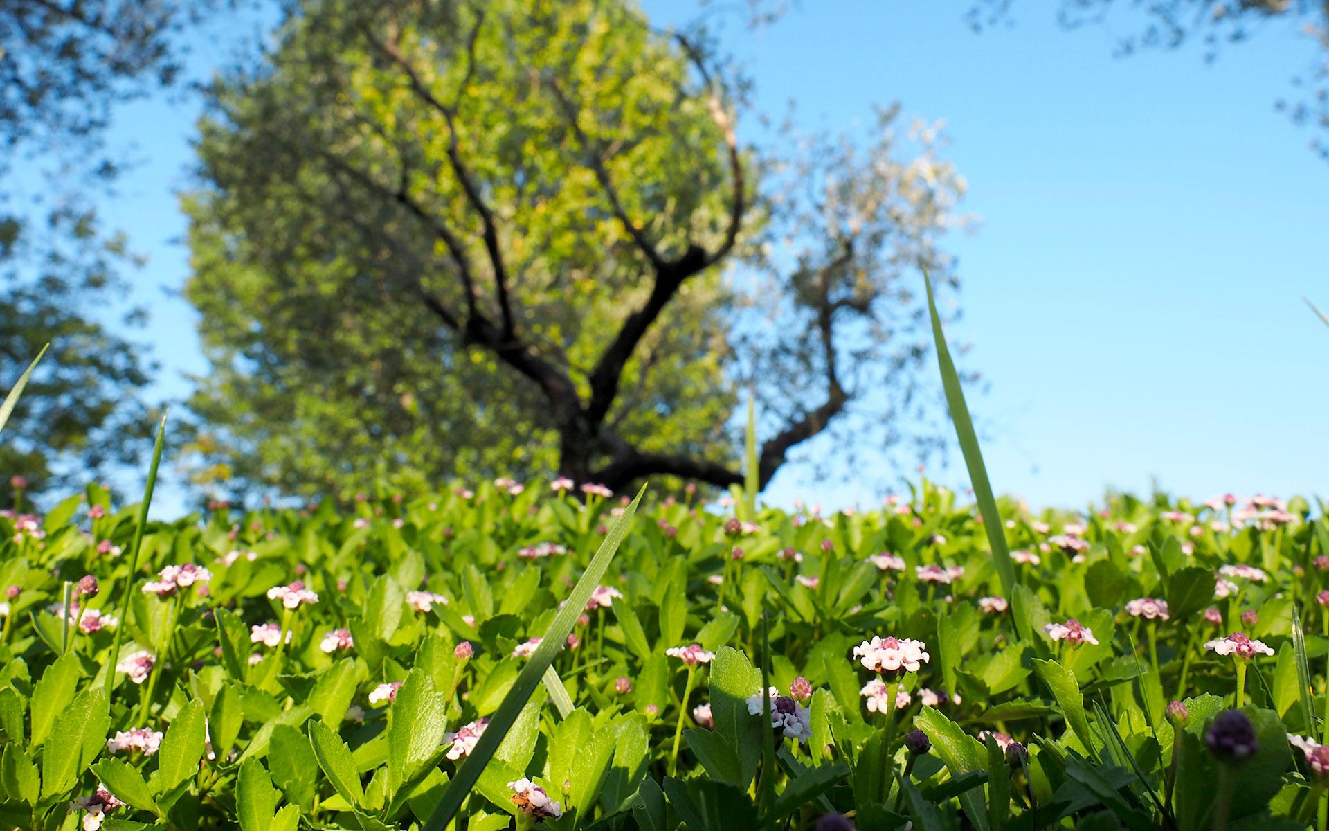 https://www.leforbici.eu/wp-content/uploads/2019/12/forbici-tree-consulenza-tecnico-agronomica-lago-garda.jpg